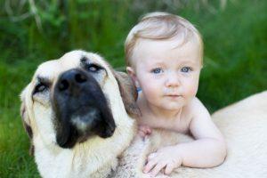bebês e cães