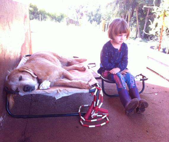 Lassie - Doença do Carrapato