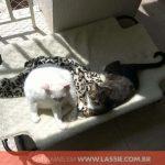 cama-cachorro-caes-cao-gato-pet-lassie_galeria_03