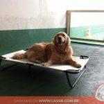 cama-cachorro-caes-cao-gato-pet-lassie_galeria_06