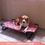 cama-cachorro-caes-cao-gato-pet-lassie_galeria_07