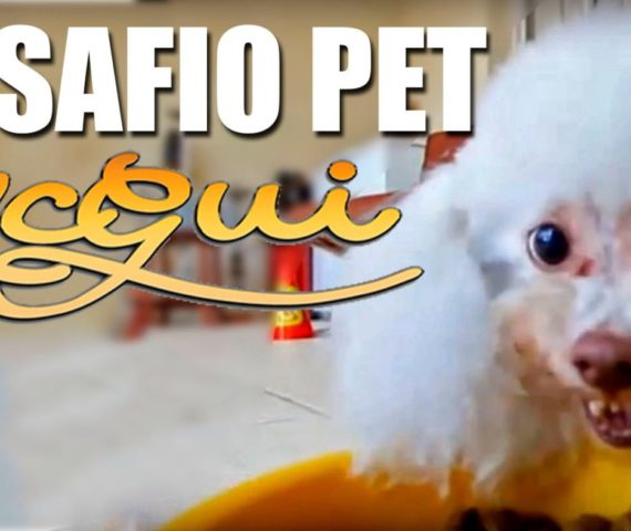 Desafio Pet - Mc Gui