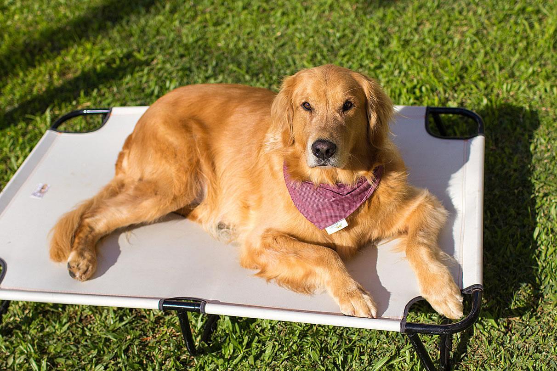 cama-cachorro-caes-cao-gato-pet-lassie_slide-golden-retriever
