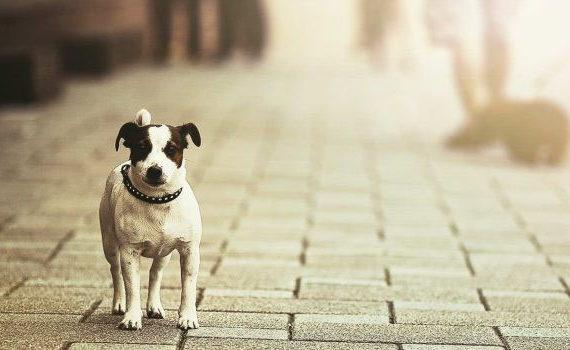 cama-caminha-cachorro-gato-pet-suspensa-abandono