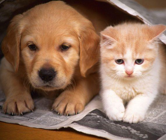 cama-caminha-cachorro-gato-pet-suspensa-gia-de-adoção
