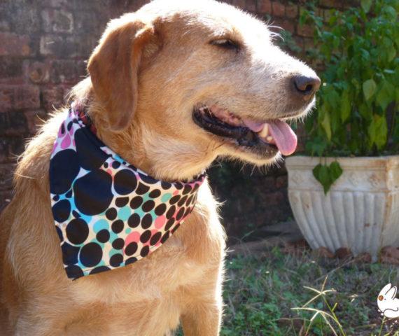 Bandanas para Cachorros Lassie