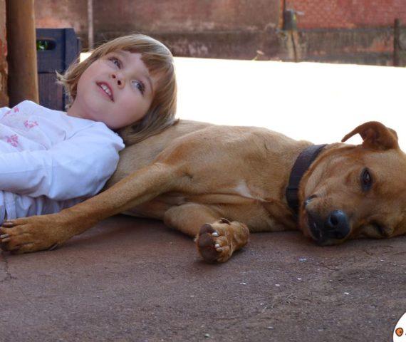 cama-pet-cachorro-gato-coelho-lassie-caminha-suspensa