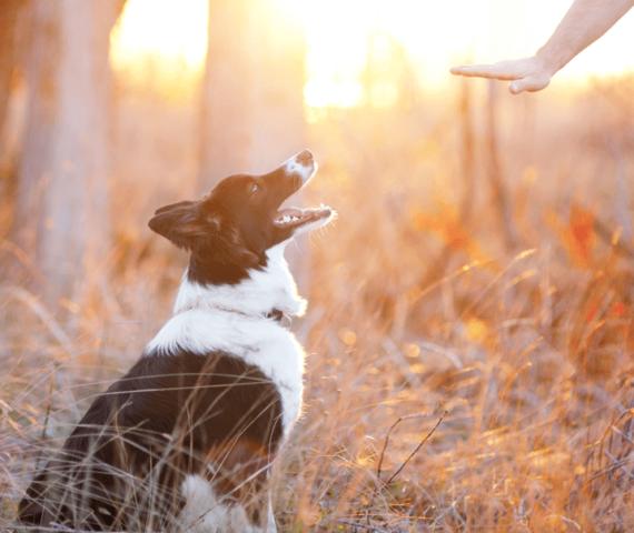 cama-caminha-pet-cachorro-gato-coelho-brandina-lassie-obediente-limite-canino-2