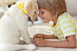 cama-pet-cachorro-gato-lassie-brandina-comportamento-canino-auto-ajuda-2