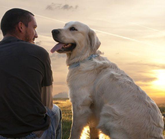 Seu cão é sua maior fonte de auto-conhecimento
