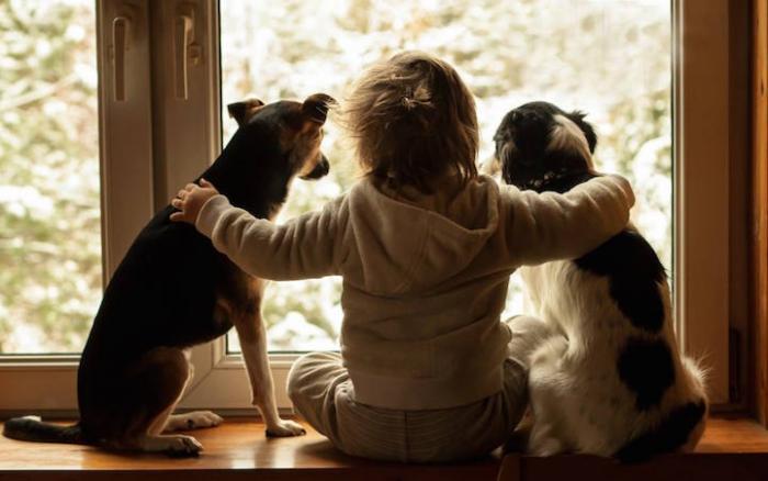 Seu cachorro é sua maior fonte de auto-conhecimento