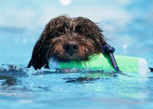 cachorro_piscina