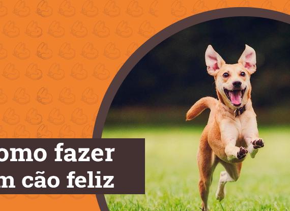 Card Blog Como fazer um cão feliz
